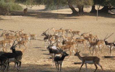Amazing Wildlife Safari / Eco-Internship In Sindh