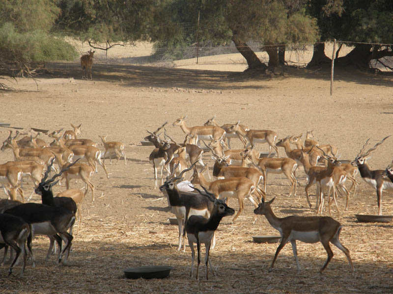 Amazing Wildlife Safari / Eco-Internship In Sindh