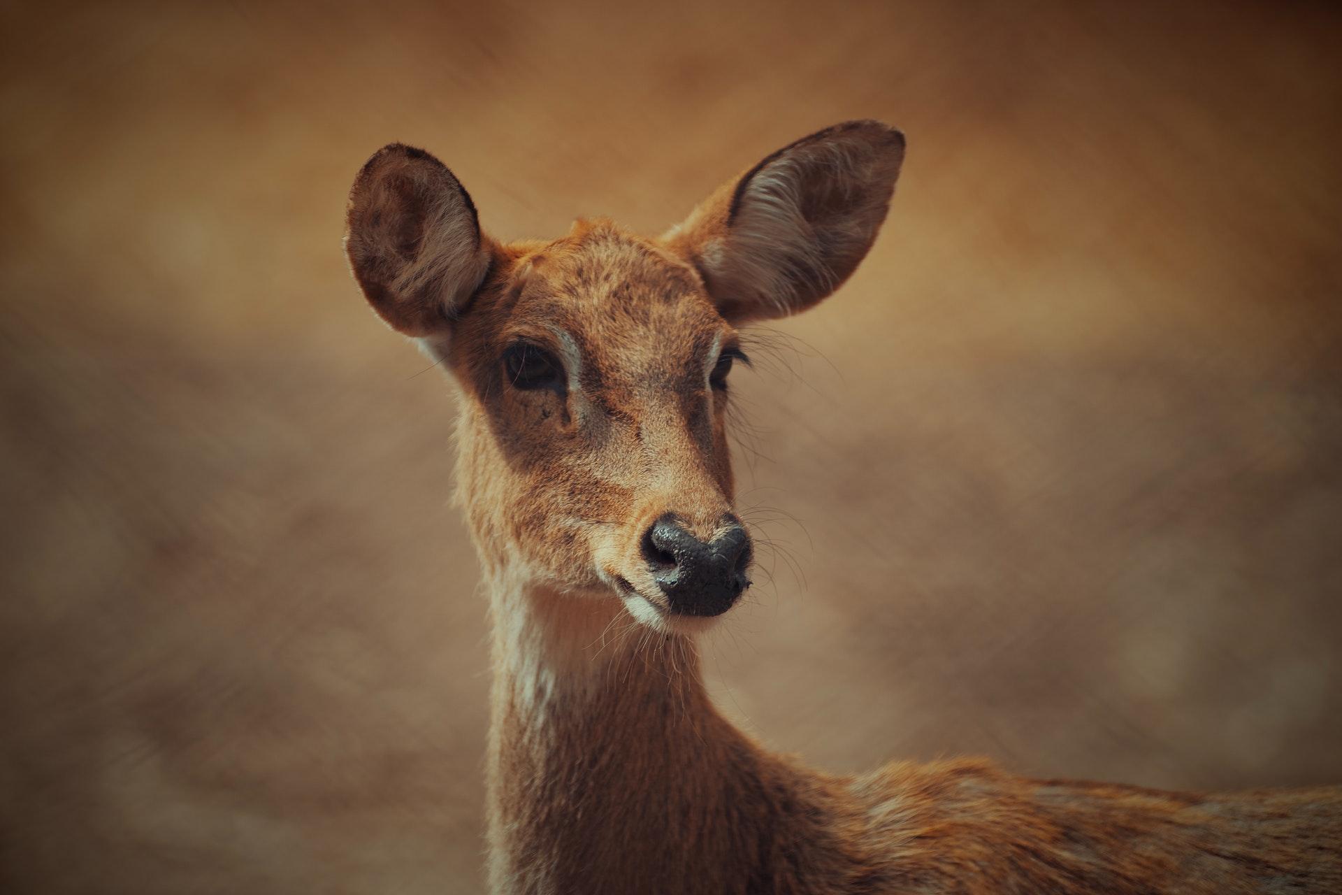 Pakistan Wildlife foundation